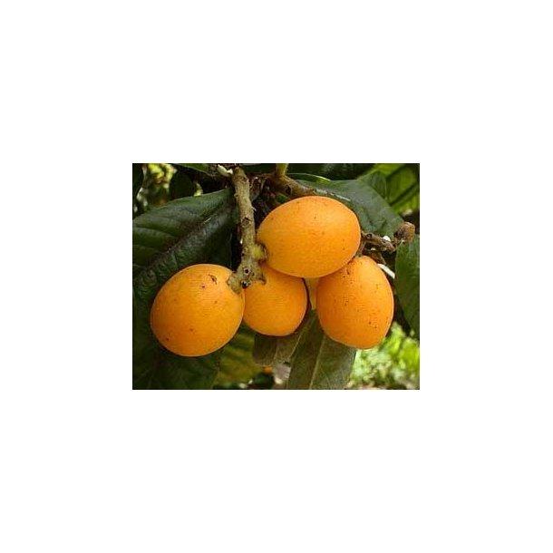 Klementiner - 750 g - økologisk