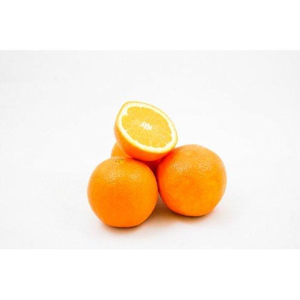 Appelsiner 1,5 kg - Økologiske