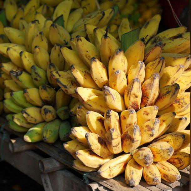 Bananer i kasse med 12 kg. - økologiske
