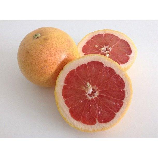 Grapefrugt 2 stk - Økologisk