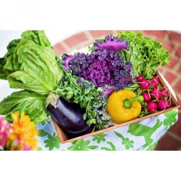 Grøntsagskassen - Økologisk